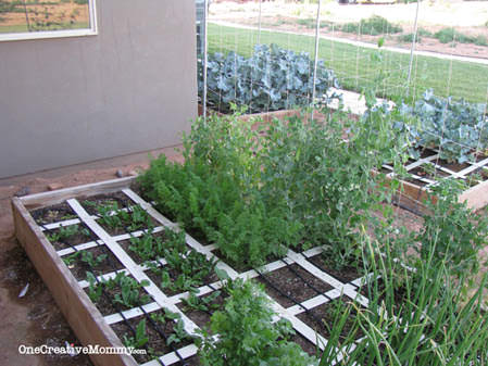 #Square #Foot #Garden in Bloom {OneCreativeMommy.com}
